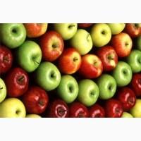 Продам оптом яблоки, хорошее качество