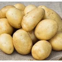Семенной картофель Лаперла (1 репродукция) Насіннєвуа ...