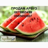 Продам арбуз, Харьковская область Хотомля, Шестаково