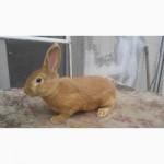 Продам кролики різнихпорід
