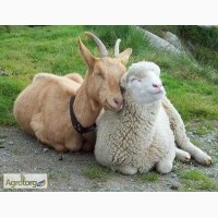Комбикорм для овец и коз гранулированный тм МаксимуМ