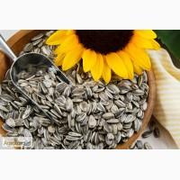 Распродажа урожая прошлого года семян подсолнечника Брио, Опера, Тунка, Белла, Мегасан, Неома