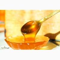 Куплю оптом мёд (подсолнух, акация, разнотравье, кориандр и т.д.)