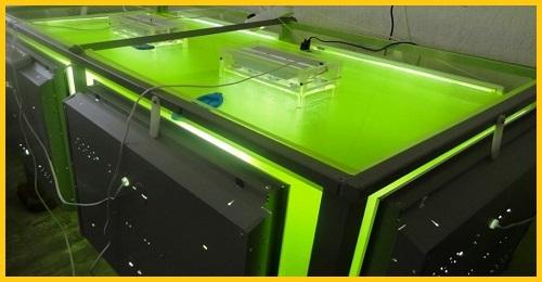Фото 2. Суспензия хлореллы (Chlorella-Vulgaris) - живой штамм хлореллы