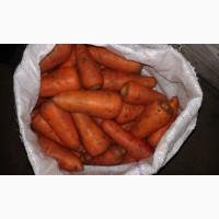 Продаю морковь 1 сорта