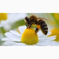 Продам бджолопакети, чотирьохрамкові! Порода Карпатка