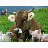 Продам зерноотход, кормовые добавки