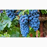 Куплю виноград оптом