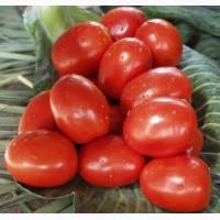 Продажа на экспорт помидор