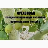 Саженцы крупноплодного грецкого ореха