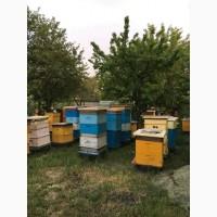 Продам пчелосемьи, отводки
