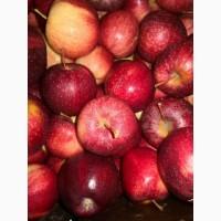 Куплю яблоки переработка