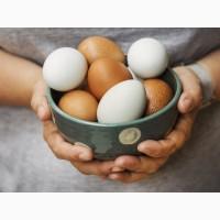Продам куриное яйцо, цены от производителя