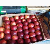Продам яблка Голден двоїчка велика кількість е щерізні сорта великий вибір