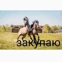 Куплю лошадей коней на мясо