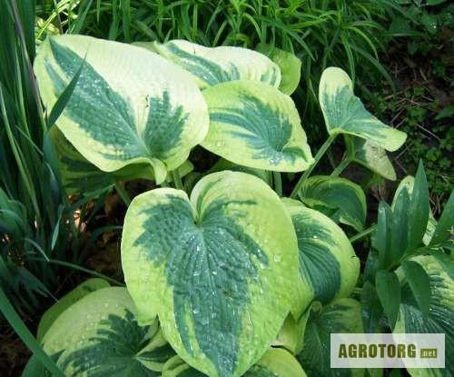 Декоративные растения для сада и дачи