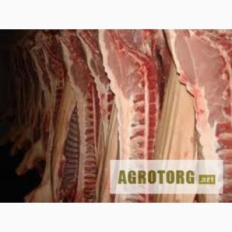 Куплю полутуши свинные.
