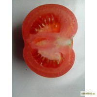 Продам томат тепличный сорт Лилос