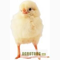 Цыплята бройлера кобб-500. опт. розница
