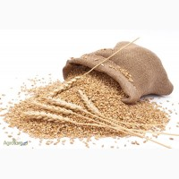 Купим пшеницу оптом