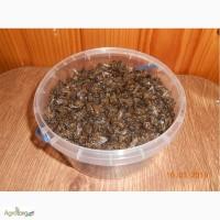 Підмор бджолиний