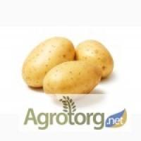 Продам большой объём картофеля