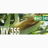 Продам семена кукурузы венгерской селекции Mv 355 (ФАО 340)