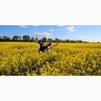Принимаем РАПС с ГМО и без и другие культуры по всем регионам Украины