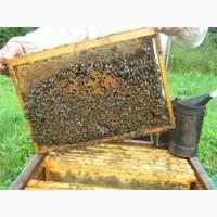 Продам пчелопакеты на 2018г (Качество, свои пчелы)