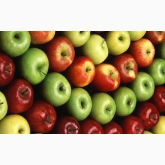 Продам яблоки айдаред. много