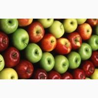 Продам яблоки разных сортов. много