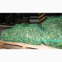 Огурчик грунтовой калиброванный собственного производства