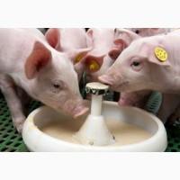 Заменитель цеьного молока для выпаивания телят, поросят, козлят сухое молоко