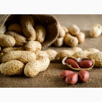 Продам семена Арахис Культурный (Земляной орех)