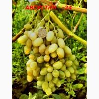 Черенки и саженцы винограда устойчивого к болезням