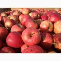Купим яблоки для переработки во всех областях Украини