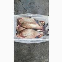 Продаж риби оптом Україна