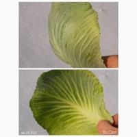 Отдам бесплатно капустный лист со склада в Харькове, Харьковская обл