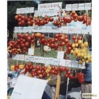 Предлагаю рассаду помидоров