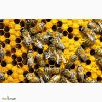 Продаю пчелы. Рамка украинская
