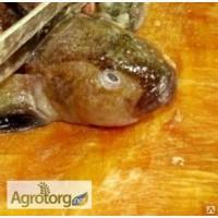 Рыбные отходы бычка (свежемороженные головы), Запорожская обл