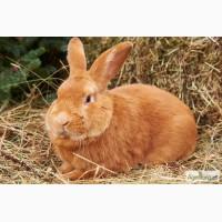 Комбикорм для кроликов в гранулах