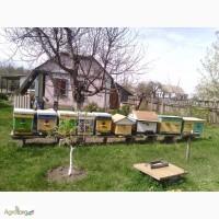 СРОЧНО продам 9 пчелосемей