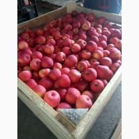 Продаж яблук всіх сортів