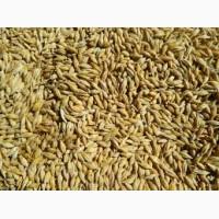 Купляємо пшеницю 3к (Фуражну) Кукурудзу Відходи кукурудзи на постійній основі