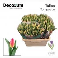 Tulip, Тюльпан, ОПТ, к 8 Марта, Киев, Украина, до 8 березня