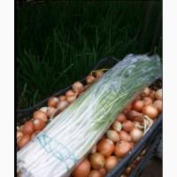 Продам лук зелёный петрушка укроп