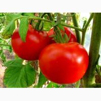Помидоры_ и др овощи и фрукти ОПТ в Турции
