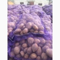 Продаем картошку с Белоруссии от 1 тонны
