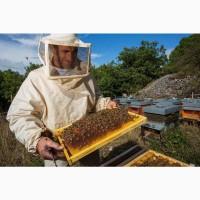 Продам пчелосемьи, пчелопакеты, матки, ульи. Личная пасека